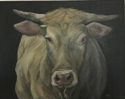 Cow (Sold)